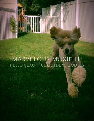Moxie Lu