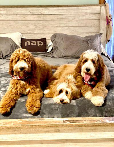 Gracie, Ruger & Ralphie